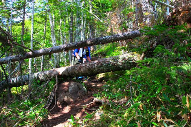 登山道 倒木