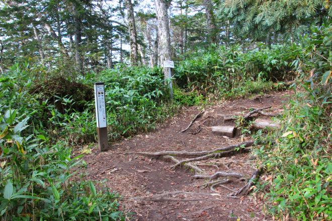 トムラウシ山 短縮登山口分岐
