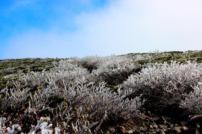 ハイマツ帯の雨氷