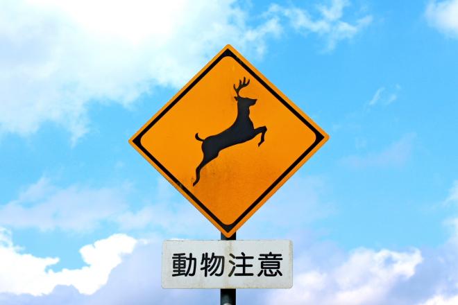 鹿飛び出し注意の看板