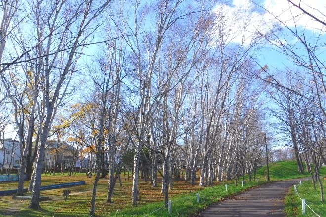 公園のダケカンバ