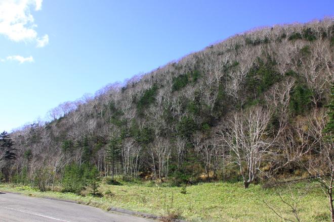 鹿追町の白樺峠