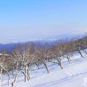 藻琴山のダケカンバ
