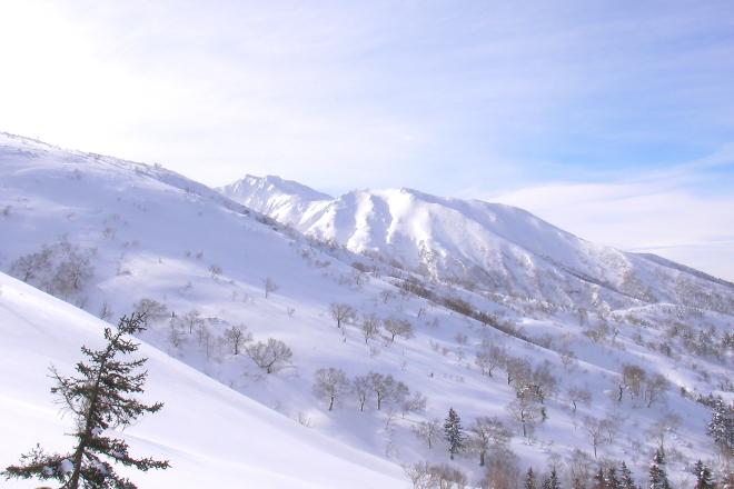 三段山のダケカンバ