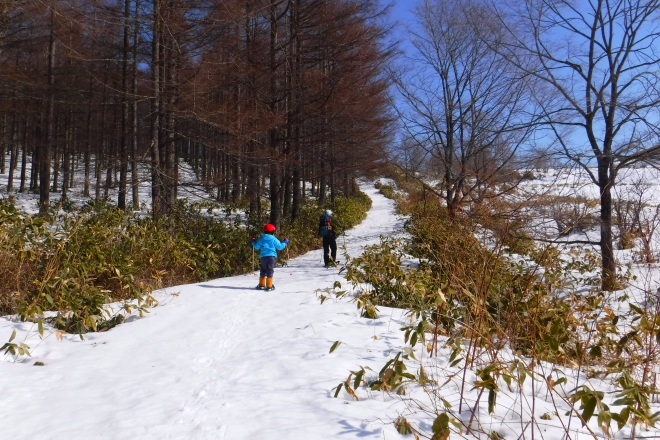 スノーシューハイク カラマツ林