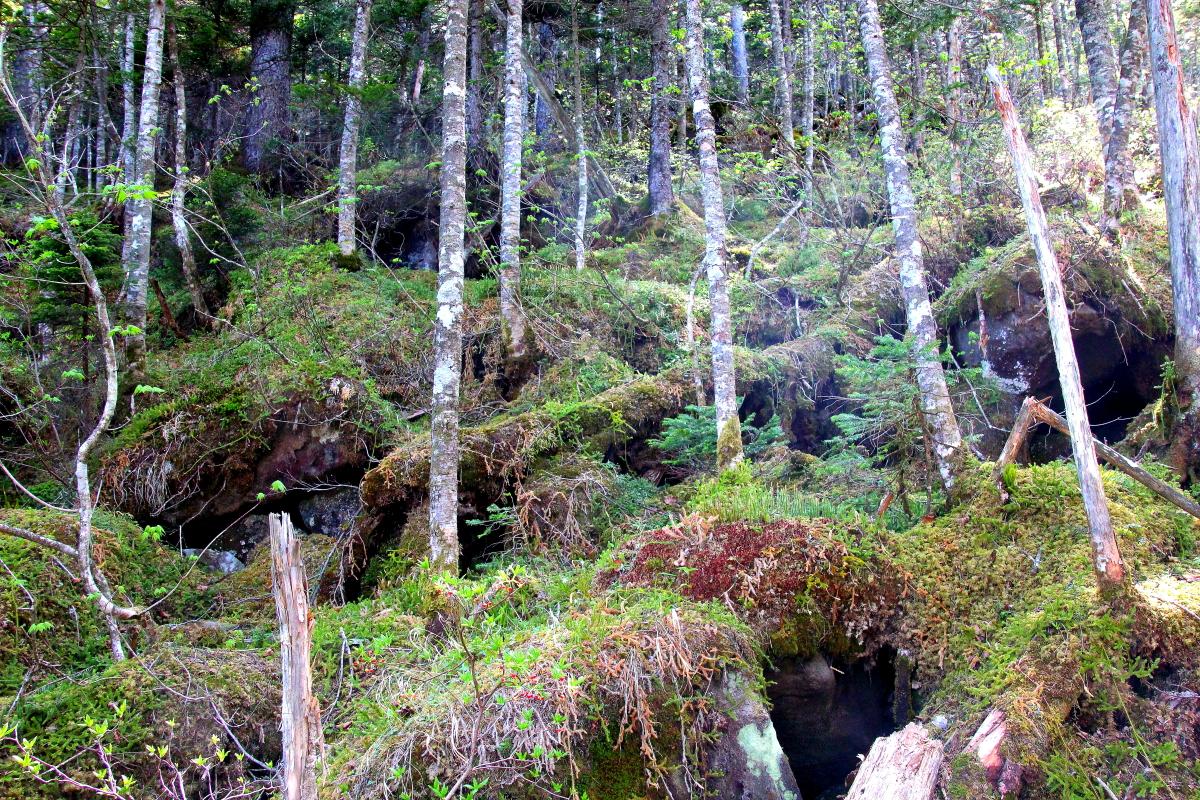 東ヌプカウシヌプリ コケの森