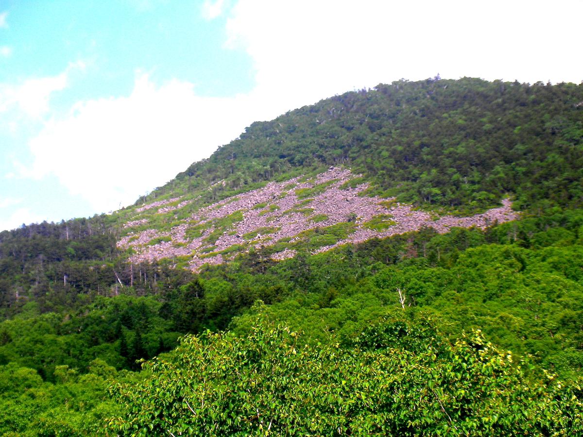 西ヌプカウシヌプリから見た植生の反転